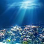 Фотообои Подводный мир