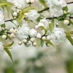 Розово-малиновые цветы № 0157