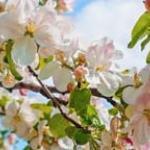 Розово-малиновые цветы № 0342