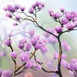 Розово-малиновые цветы № 0422