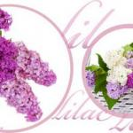 Фиолетовые цветы 0656
