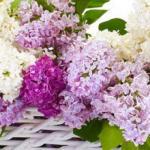 Фиолетовые цветы 0667