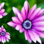 Розово-малиновые цветы № 0677
