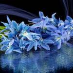 Сине-голубые цветы № 0730