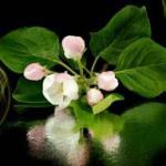 Розово-малиновые цветы № 0761