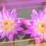 Розово-малиновые цветы № 0770