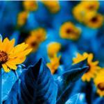 Желтые цветы № 1378