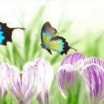 Фиолетовые цветы 1381
