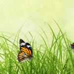 Трава зелень № 1407