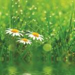 Трава зелень № 1461