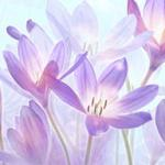 Фиолетовые цветы 1493