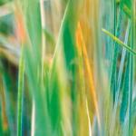 Трава зелень № 1590