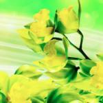 Желтые цветы № 1759