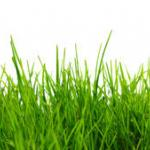 Трава зелень № 1824