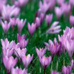 Фиолетовые цветы 2111
