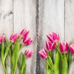 Тюльпаны № 2130
