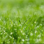 Трава зелень № 2215
