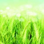 Трава зелень № 2263