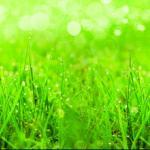 Трава зелень № 2264