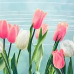Тюльпаны № 2314