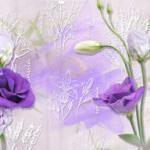 Фиолетовые цветы 2332
