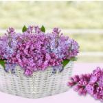 Фиолетовые цветы 2590