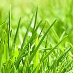 Трава зелень № 2805