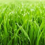 Трава зелень № 2823