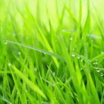 Трава зелень № 2857