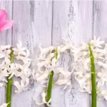 Тюльпаны № 2965