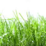 Трава зелень № 3440