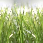 Трава зелень № 3588