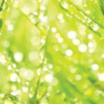 Трава зелень № 3604