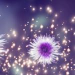 Фиолетовые цветы 3805