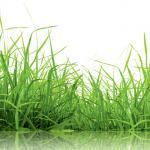Трава зелень № 4072