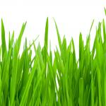 Трава зелень № 4073