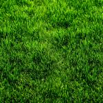 Трава зелень № 4685