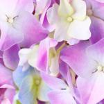 Фиолетовые цветы 4871