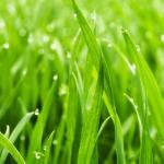 Трава зелень № 4892