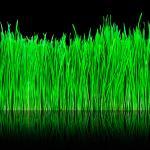 Трава зелень № 5040