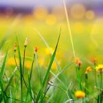 Желтые цветы № 5138