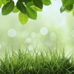 Трава зелень № 5166