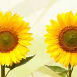 Желтые цветы № 5442