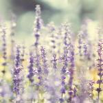 Фиолетовые цветы 5481