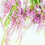 Фиолетовые цветы 5592