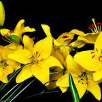 Желтые цветы № 5635