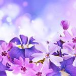 Фиолетовые цветы 5649