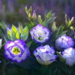 Фиолетовые цветы 5736