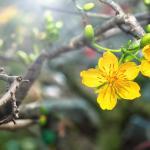 Желтые цветы № 6113