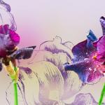 Фиолетовые цветы 6136